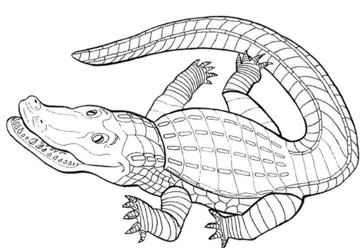 Mẫu tranh tô màu hình con cá sấu hung tợn dành cho bé từ 2 đến 5 tuổi