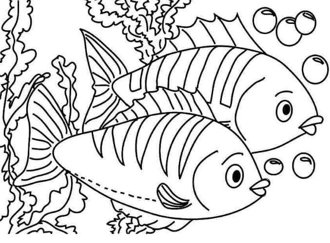 Mẫu tranh tô màu dành cho bé từ 2 đến 5 tuổi hình 2 chú cá