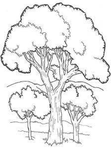 Mẫu tranh tô màu cây xanh cho bé mầm non