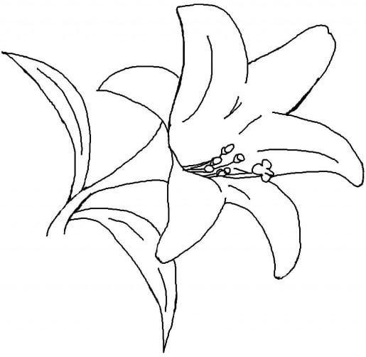 Mẫu tranh tô màu cho bé 2 tuổi hình bông hoa đơn giản