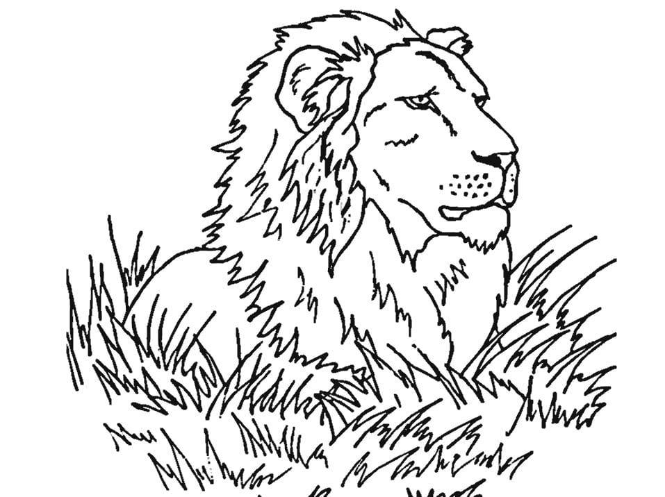 Tranh tô màu động vật – hình sư tử