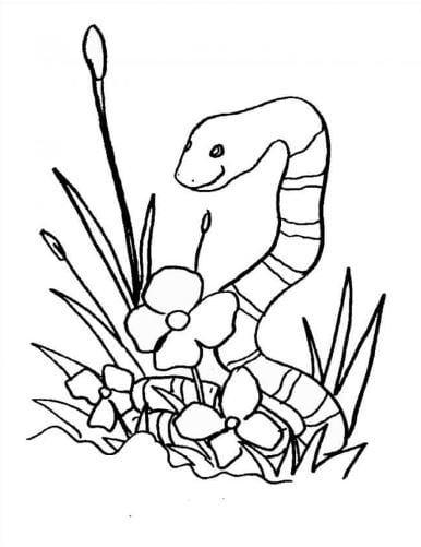 Mẫu tranh tô màu hình con rắn và hoa danh cho bé