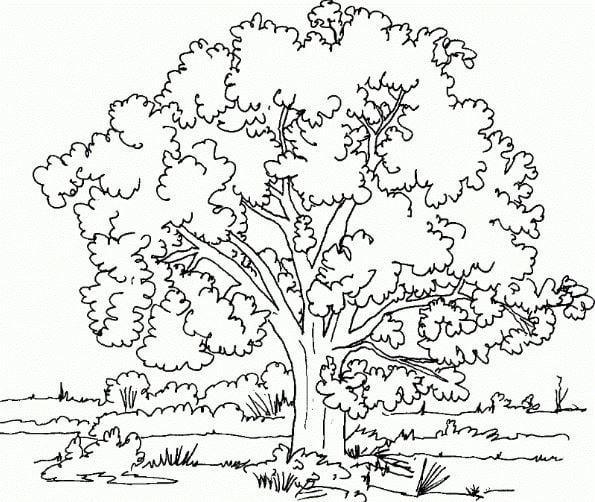 Mẫu tranh tô màu cây cổ thụ dành cho bé mầm non