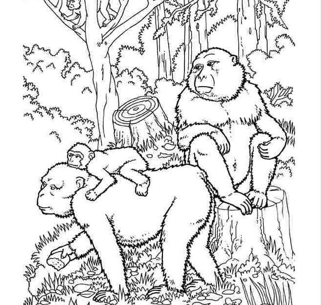 Mẫu tranh tô màu cho bé hình gia đình nhà khỉ