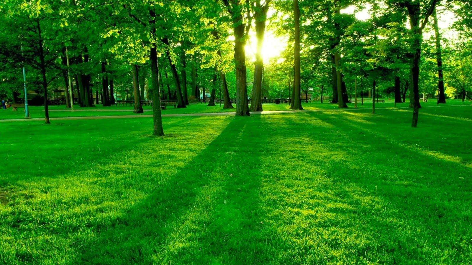 与美丽的绿色景观的自然图片