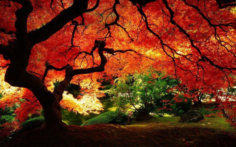 来自大自然给予的生物的鲜红色图片