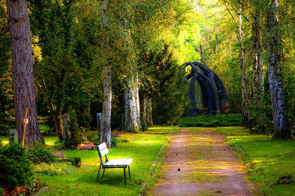 Sự hài hòa giữa cây cối cùng với ánh sáng đã tạo nên một bức tranh tuyệt đẹp