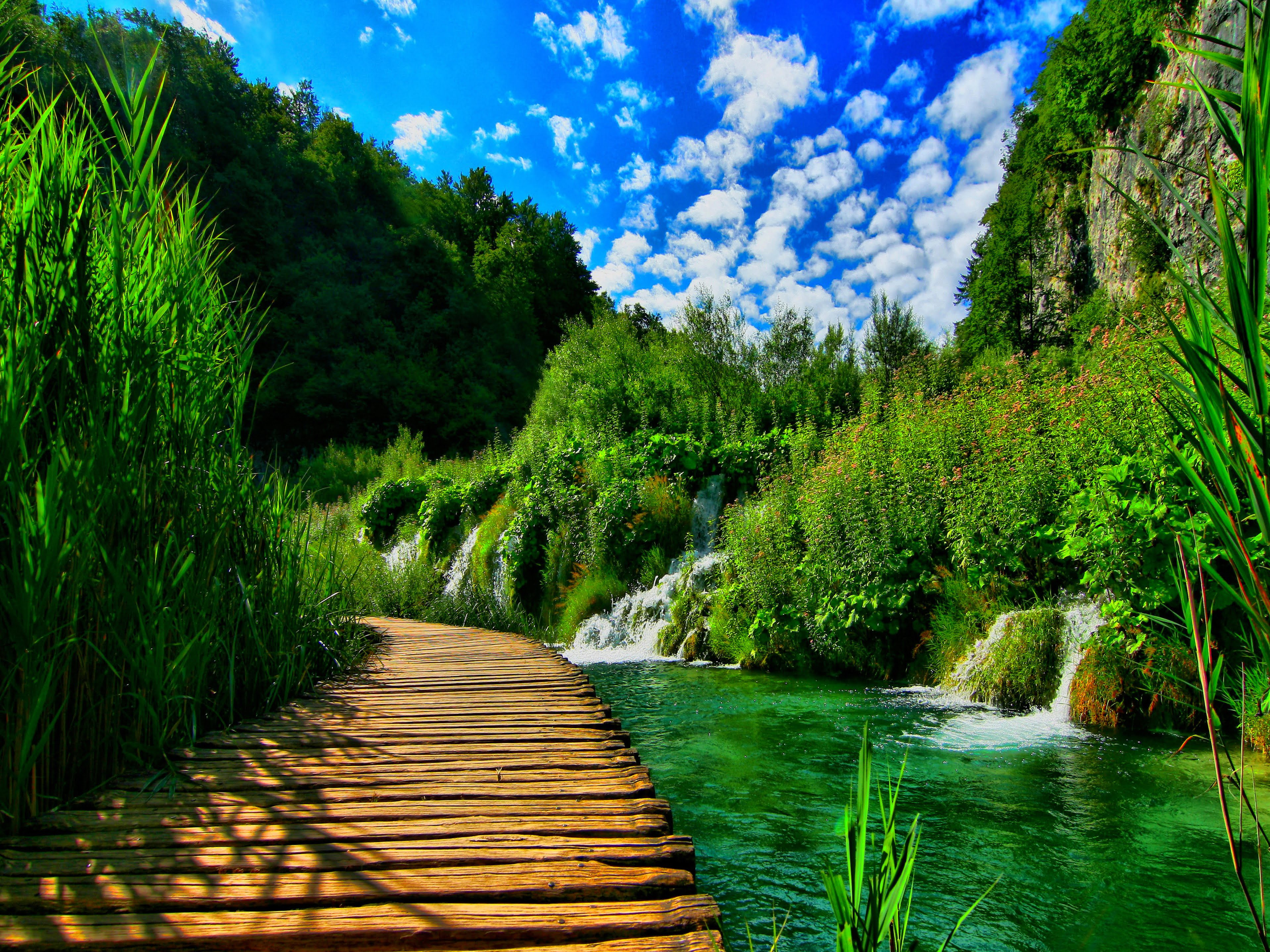 天空,树木和水之间的自然景观和谐