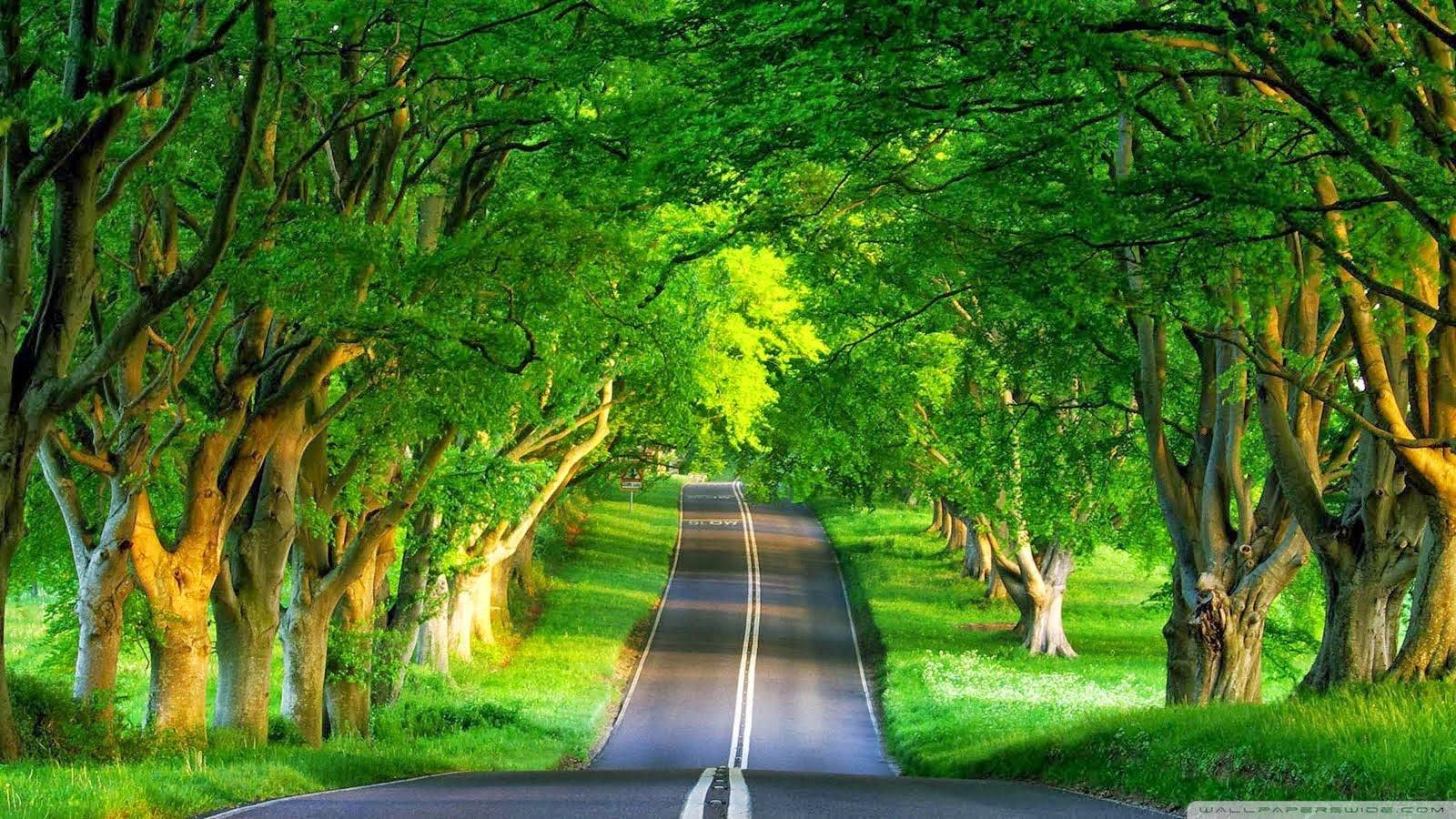 图片是树木之间的一条路