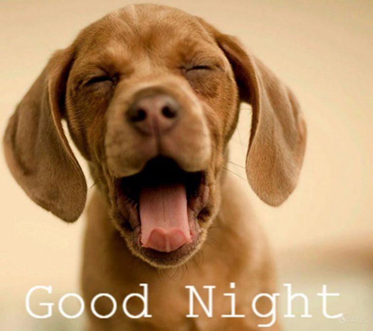 Hình cảnh chúc ngủ ngon gây cười cho người xem