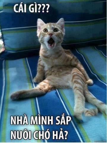 Ảnh chế hài hước của chú mèo khi nge tin sắp nuôi chó
