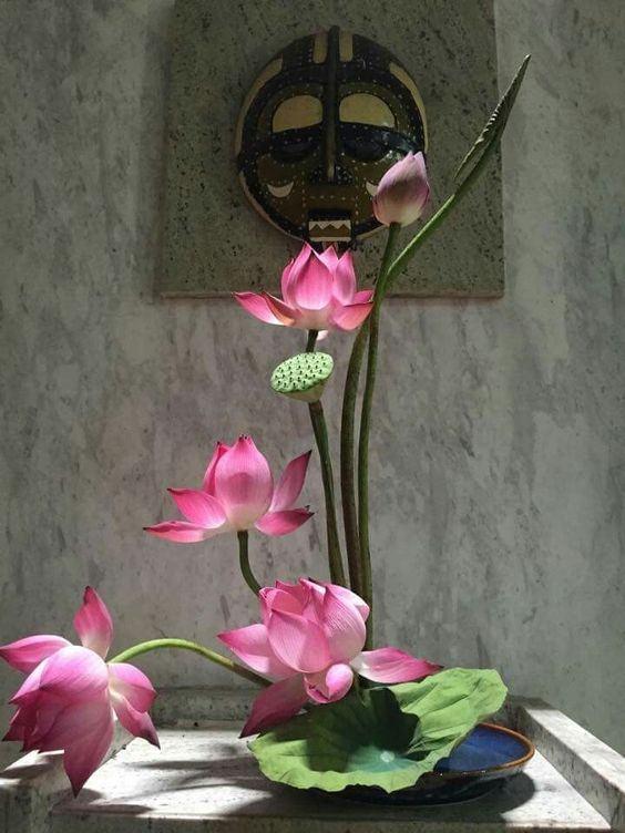 Tổng hợp hình ảnh búp sen hồng