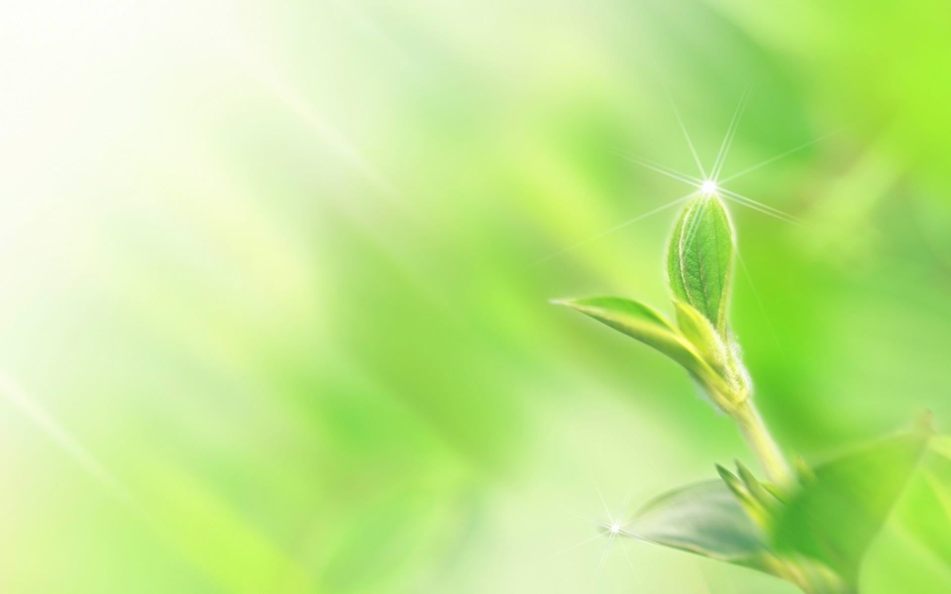 Backgroud Powerpoint thuyết trình đẹp - Mần cây xanh