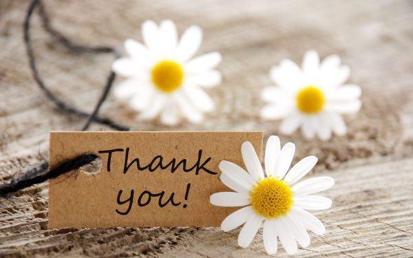 Hình ảnh cảm ơn trong silide Powerpoint thuyết trình - với hoa cúc trắng