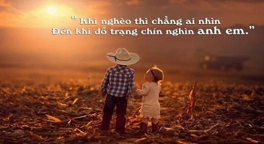 Những câu nói hay về tình anh em cực kì ý nghĩa và chính xác! 1
