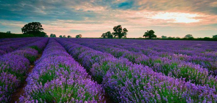 Ảnh bìa đẹp phong cảnh vườn hoa đầy lãng mạng