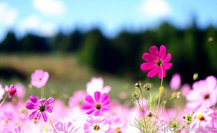 Ảnh bìa đẹp phong cảnh thiên nhiên dành cho facebook