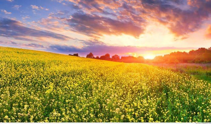 Ảnh bìa đẹp khung cảnh vườn hoa