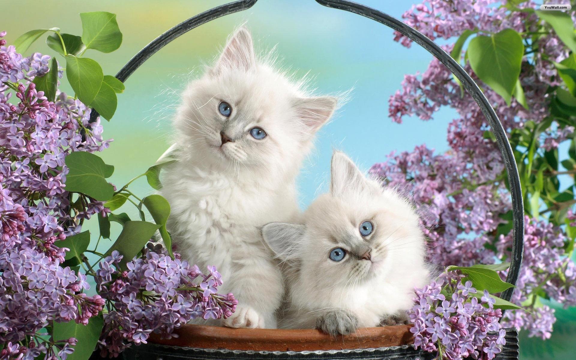 Hình ảnh đáng yêu của những chú mèo con giúp bạn quên đi sự mệt mỏi sau công việc