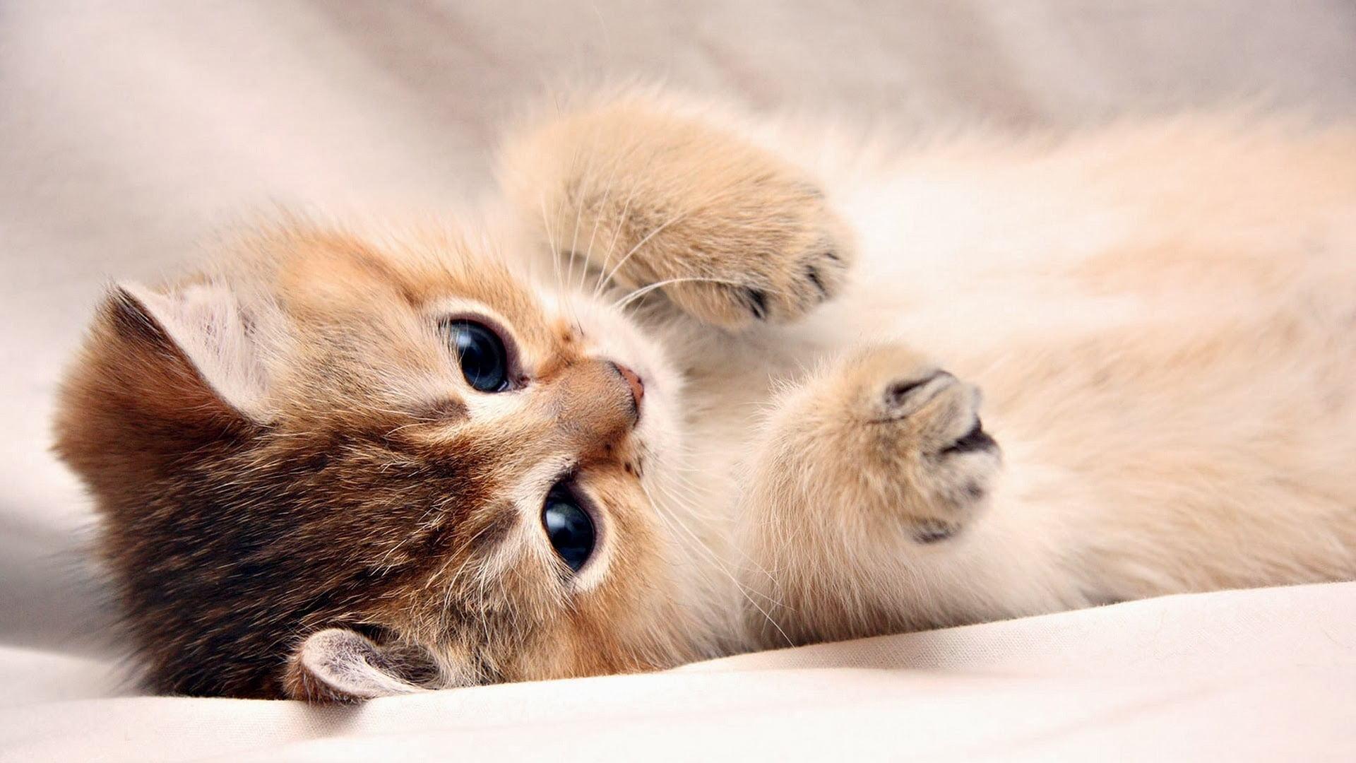 Hình ảnh những tư thế tinh nghịch của chú mèo con trông rất đáng yêu