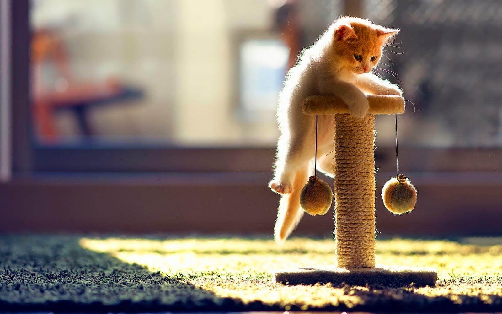 Hình ảnh chú mèo con đang chơi đùa thật đáng yêu