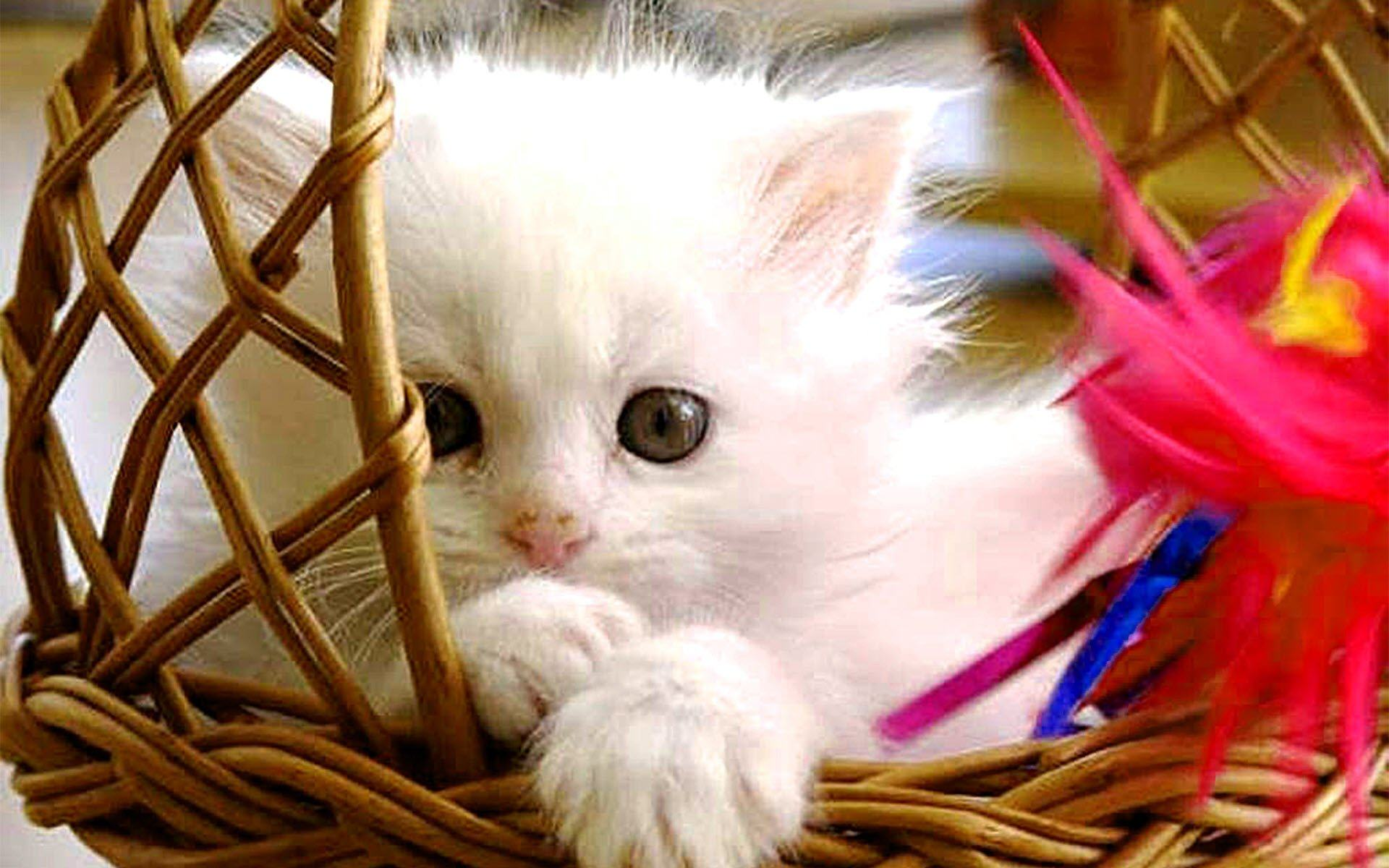 Hình ảnh chú mèo con dễ thương với đôi mắt tròn to và long lanh
