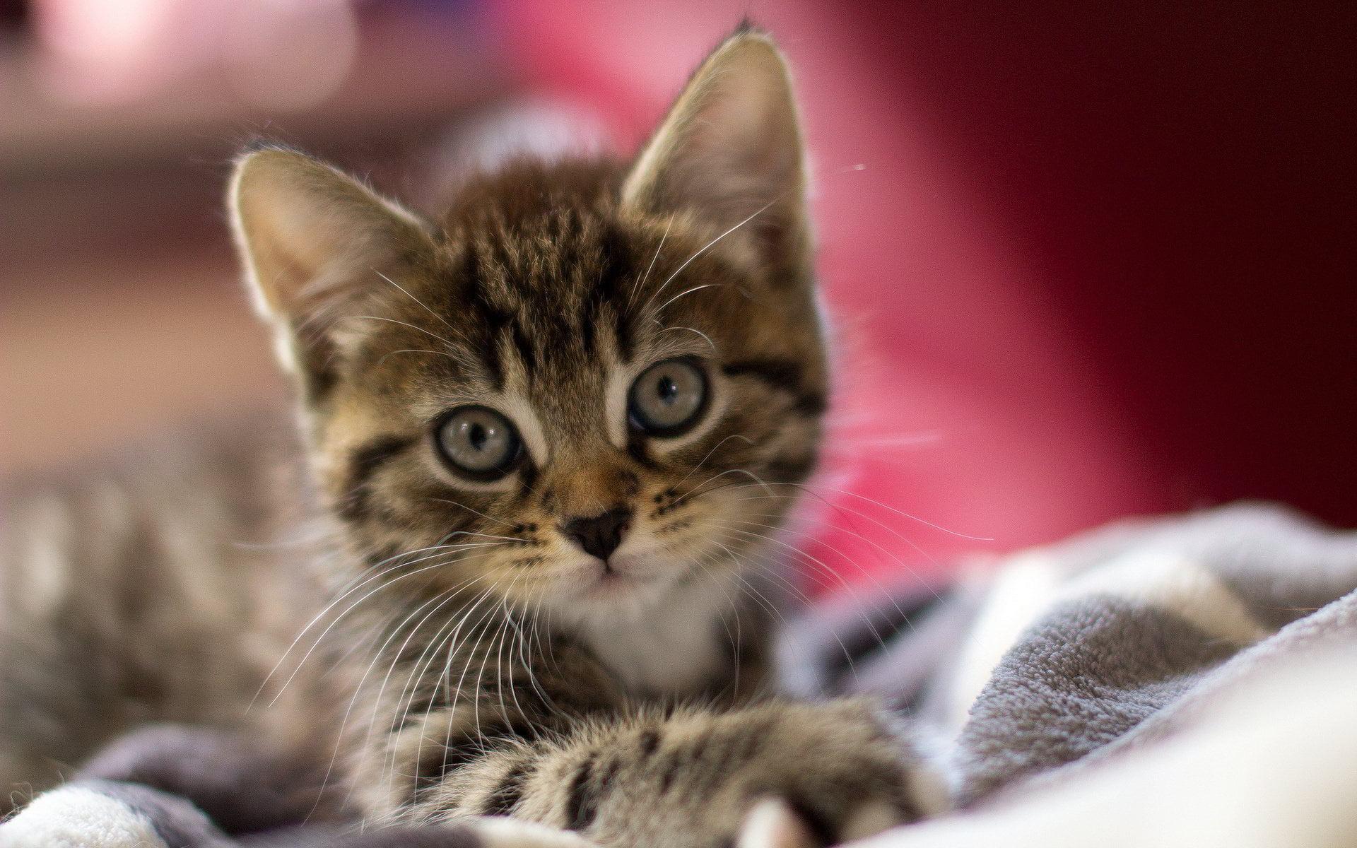 Hình ảnh chú mèo mướp dễ thương