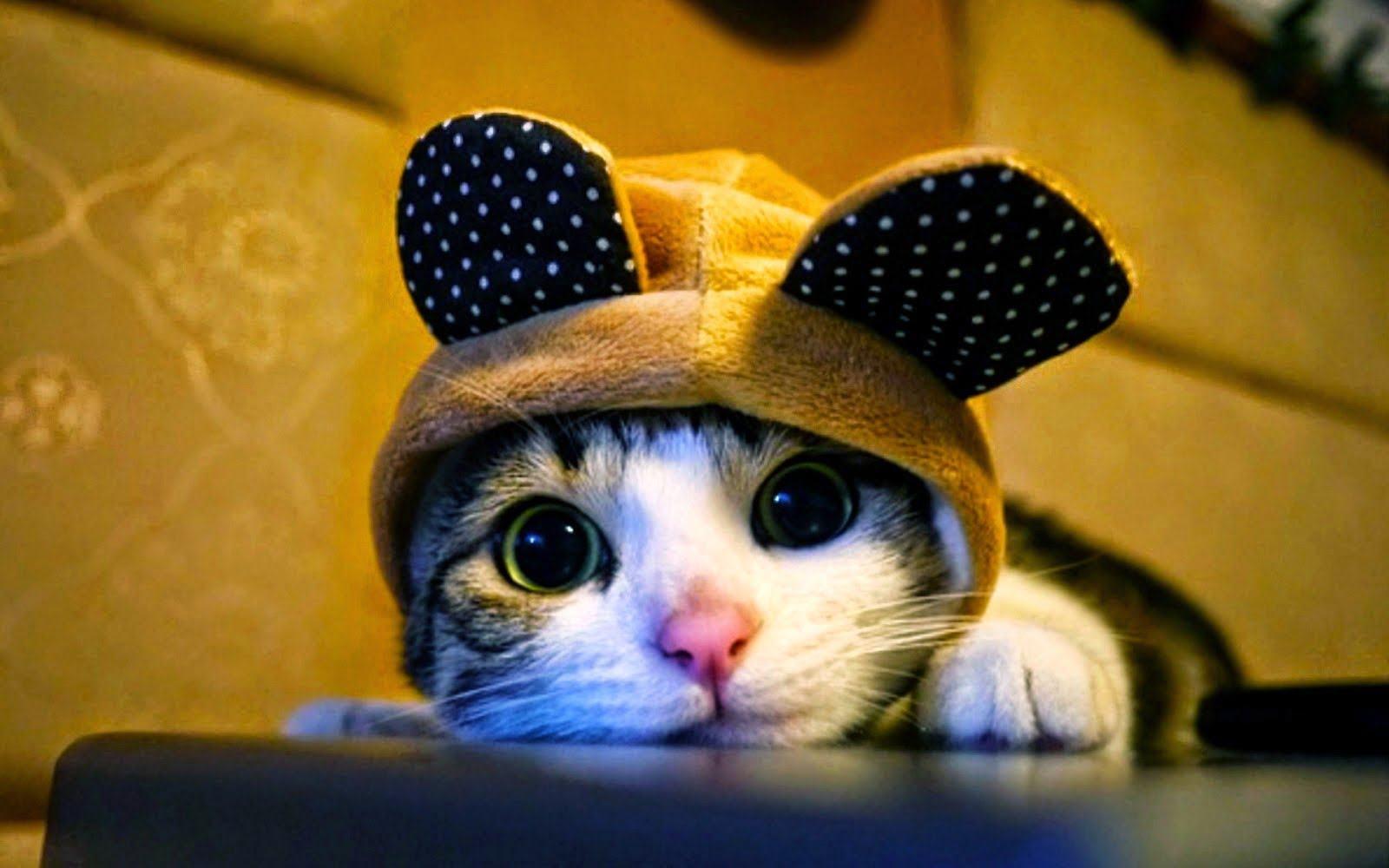 Hinh ảnh đáng yêu của mèo con khi được chủ nhân khoát lên bộ đồ
