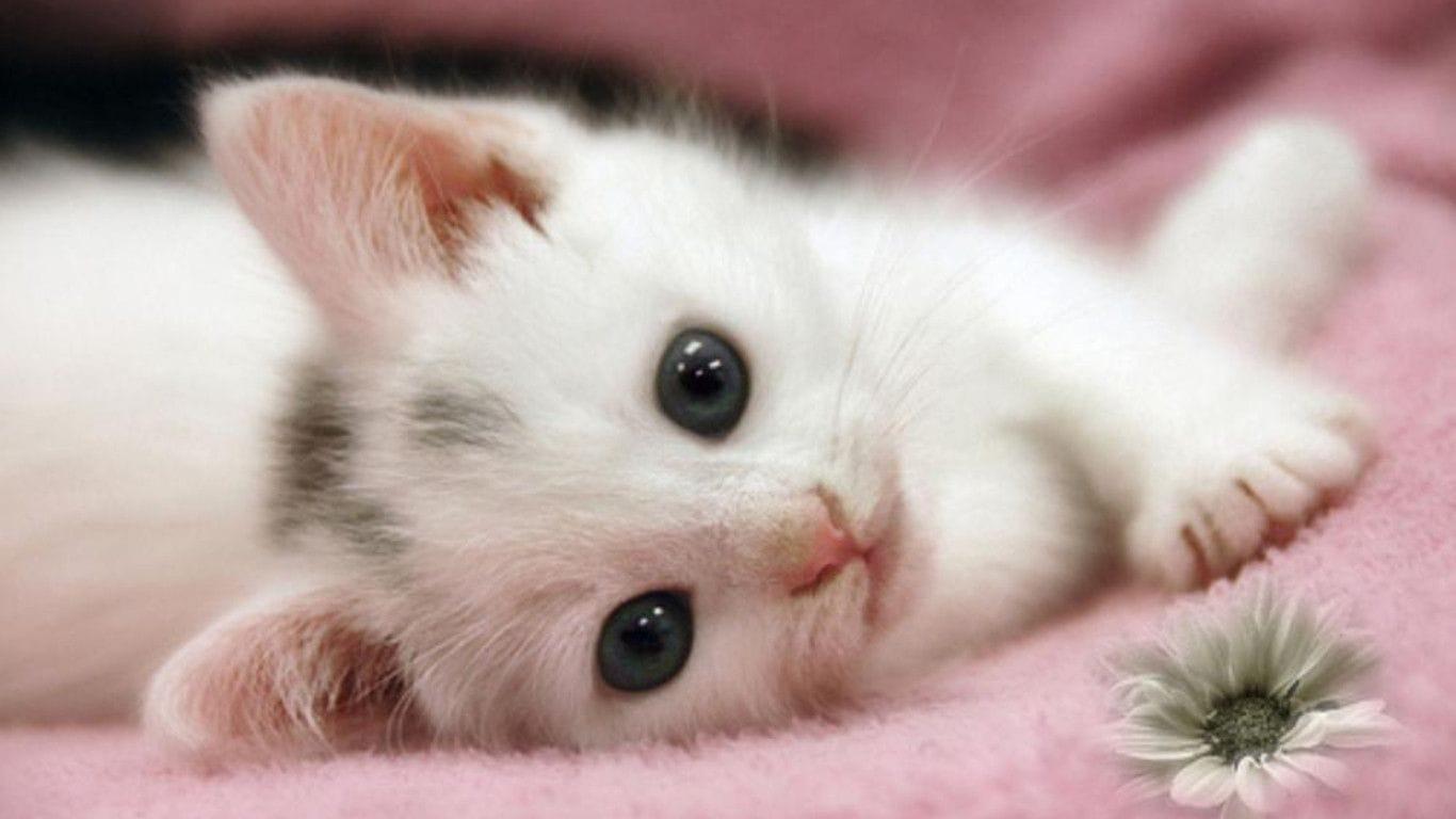 Hình ảnh chú mèo con dễ thương trên chiếc khăn màu hồng
