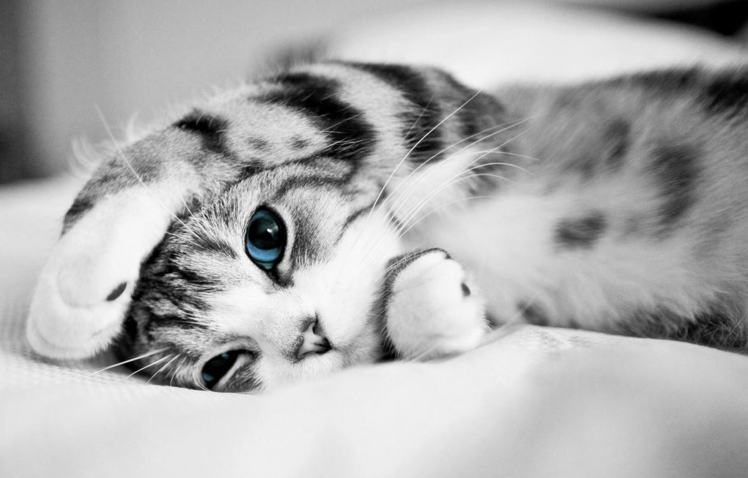 Hình ảnh chú mèo con siêu cute và dễ thương