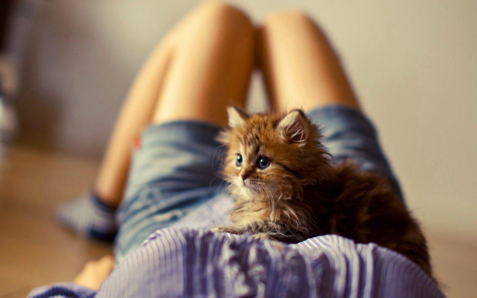 Hình ảnh đáng yêu của chú mèo con đang nằm trong lòng của chủ nhân