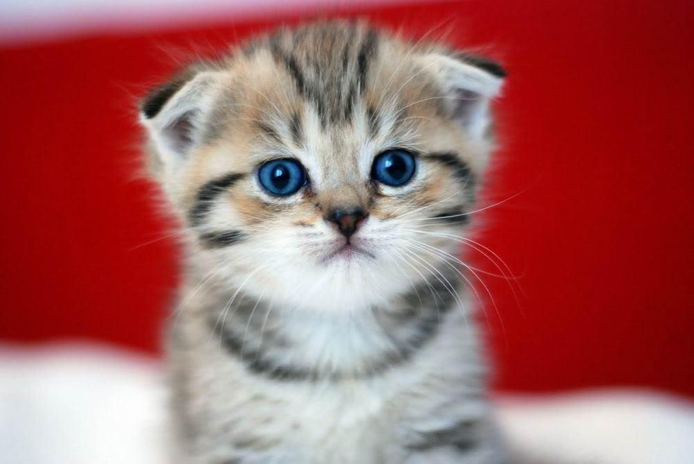 Hình ảnh ngây ngô tỏ ra đáng thương của chú mèo con