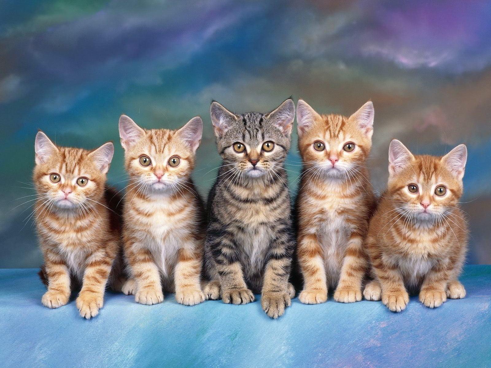 Hình ảnh anh em nhà mèo cũng rất dễ thương và đáng yêu phải không nào