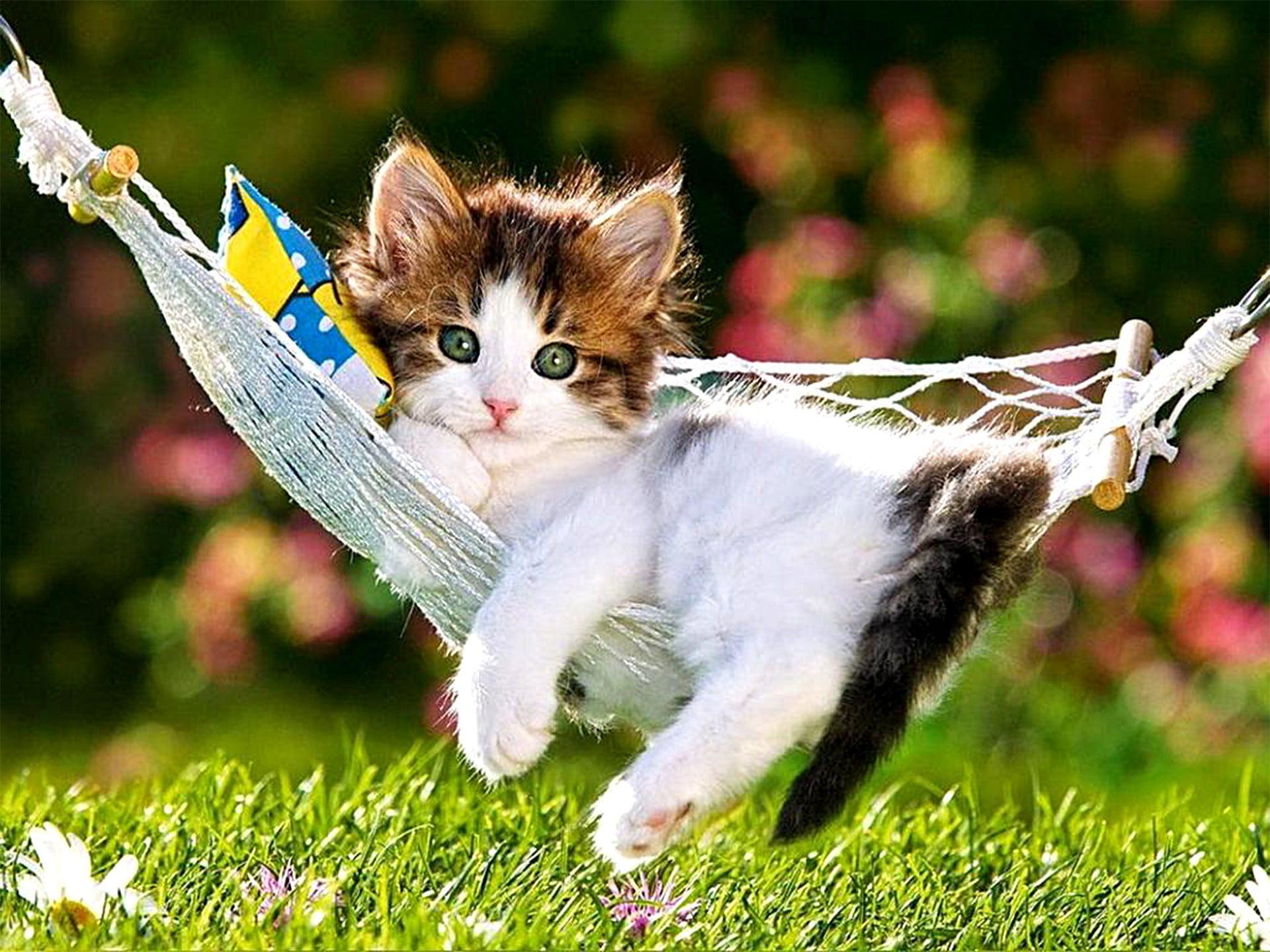 Hình ảnh chú mèo con đang nằm với tư thế đáng yêu