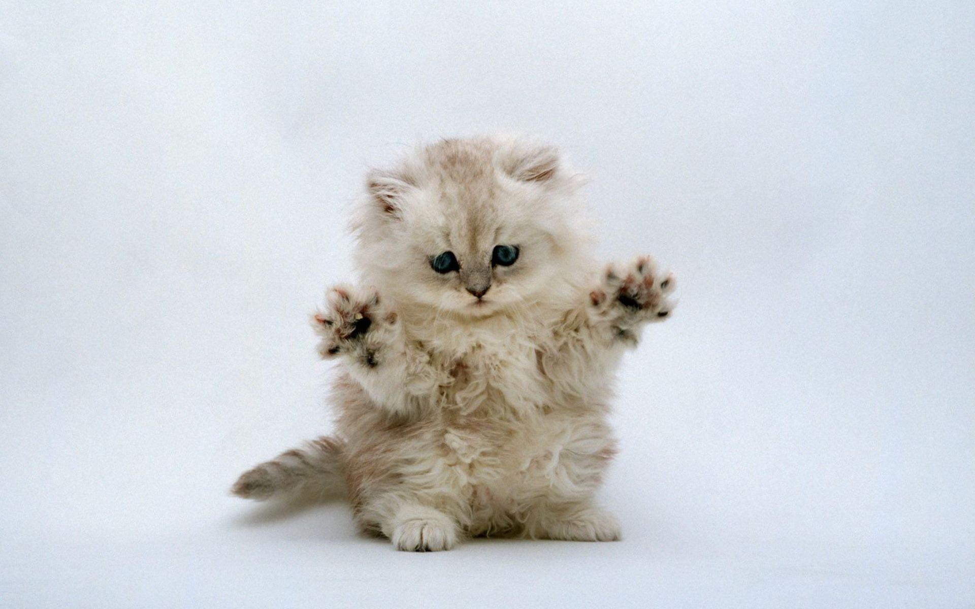 Hình ảnh chú mèo con đang phô diễn kỹ năng vồ chuột