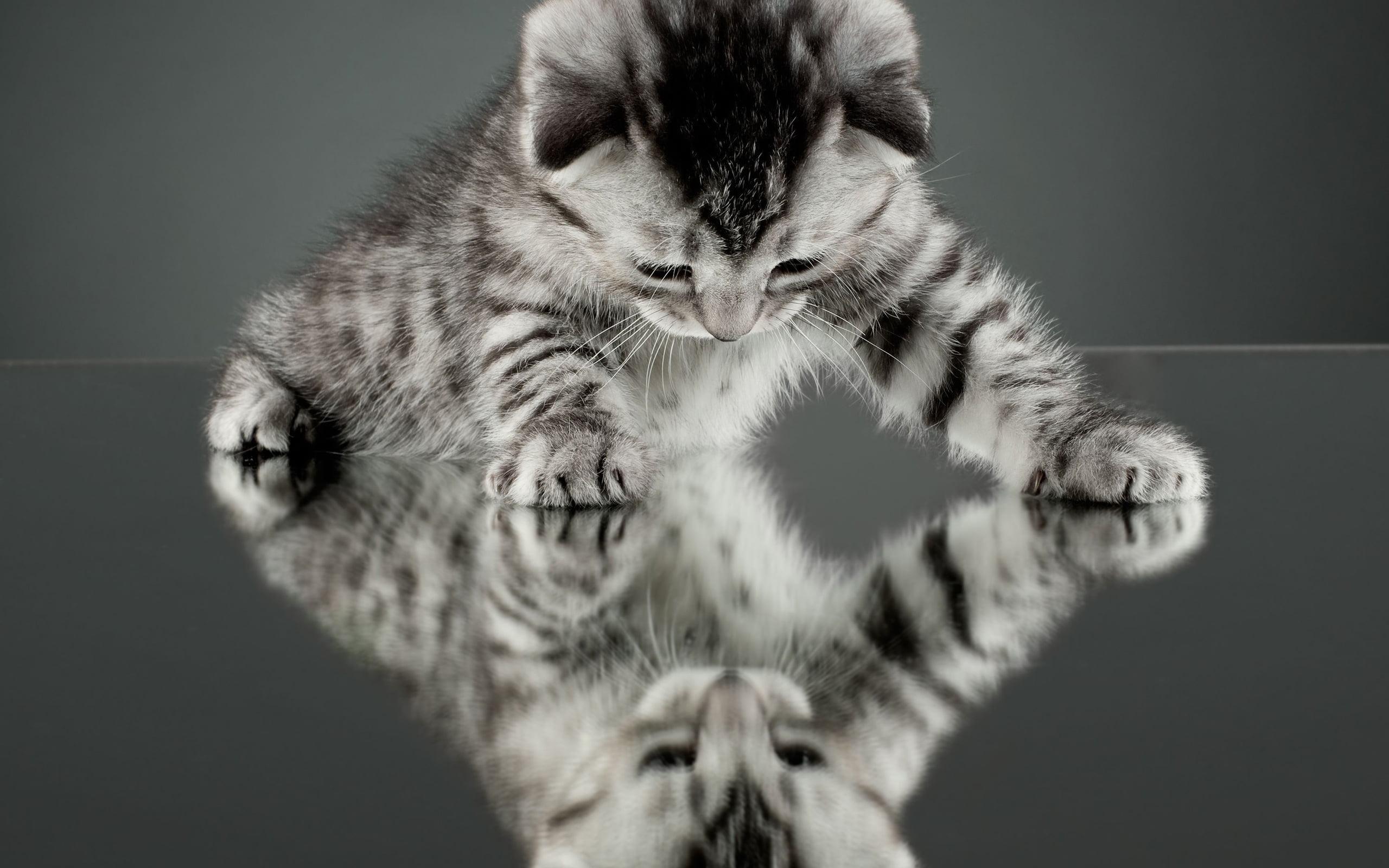Hình ảnh hài hước của chú mèo - không biết có biết đó là cái bóng của mình không ta
