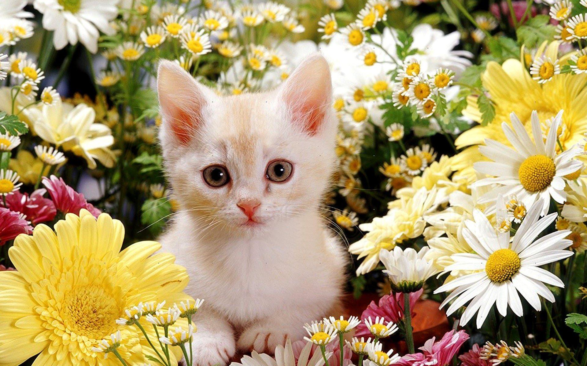 Hình ảnh cô mèo con xinh đẹp bên vườn hoa