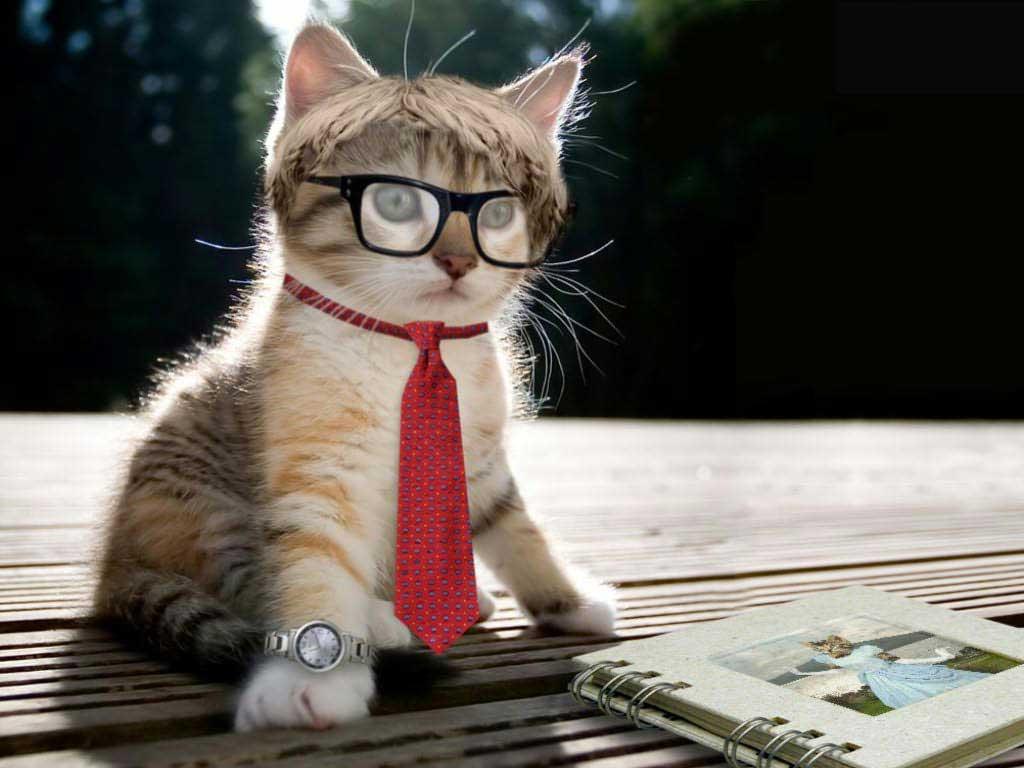 Hình ảnh chú mèo đáng yêu luôn co bóng dáng tạo hình của chủ nhân phía sau