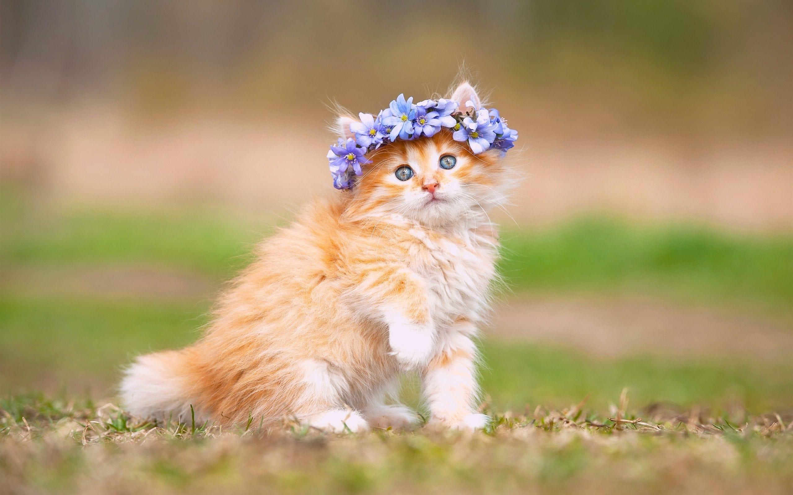Hình ảnh chú mèo con cực đẹp khi được chủ nhân đeo chiếc vòng hoa trên đầu
