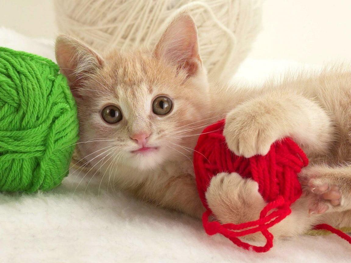 Hình ảnh đáng yêu của mèo con đang nô đùa với những cuộn len