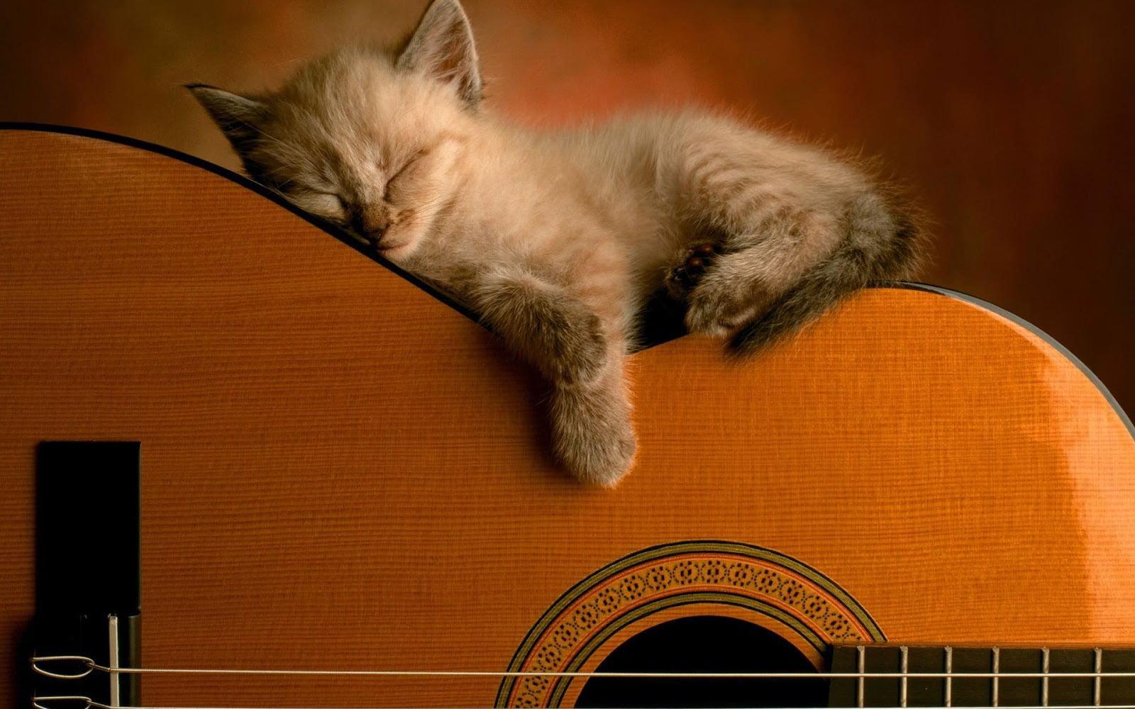 Hình ảnh đáng yêu của chú mèo con đang ngủ trên cây đàn