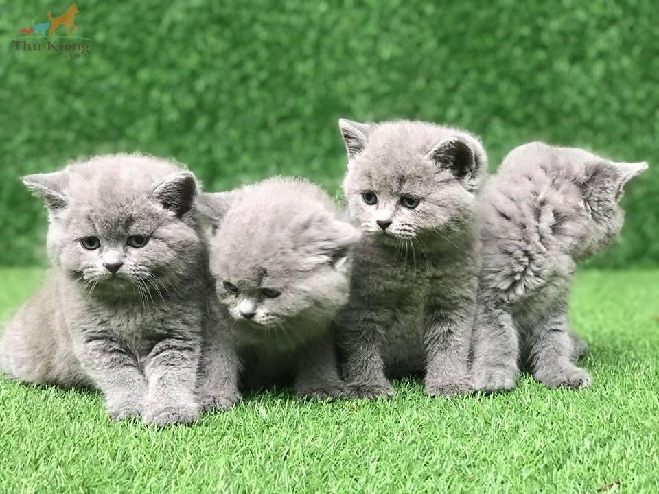Hình ảnh những chú mèo dễ thương
