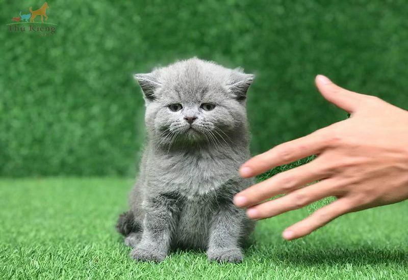 Hình ảnh trông rất dễ thương của chú mèo con đang hờn ai đó