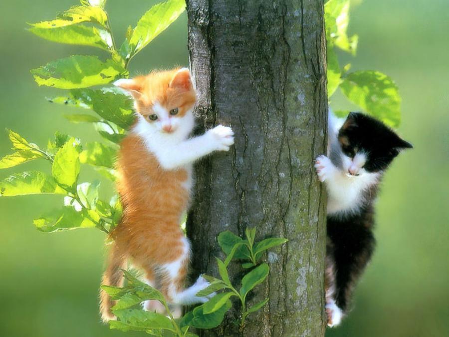 Hình ảnh 2 chú mèo con đang thi nhau ai trèo cây nhanh hơn trông thật đáng yêu