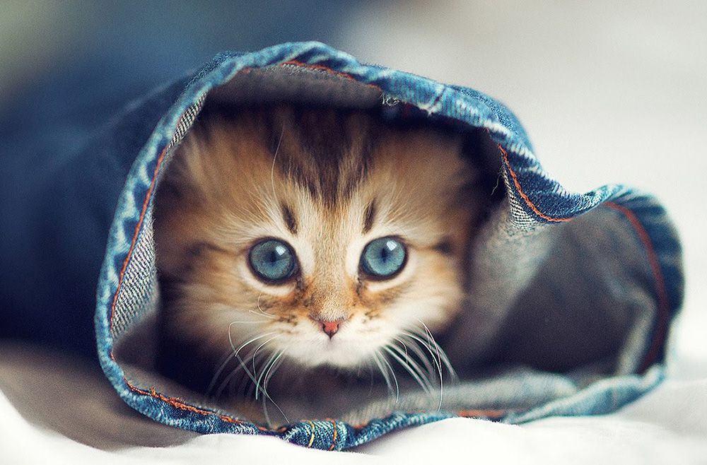 Hình ảnh đáng yêu của chú mèo con đang chơi trốn tìm