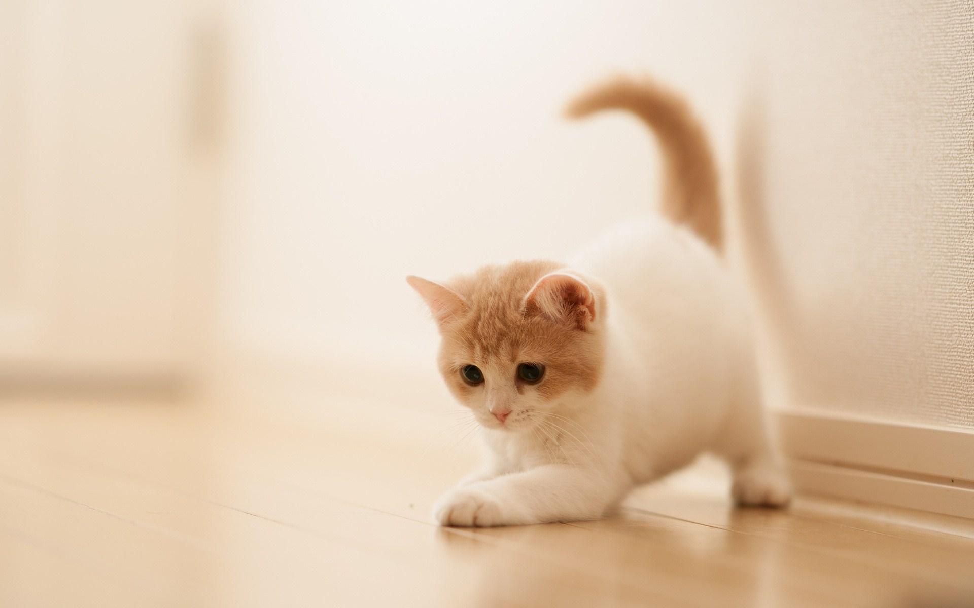 Hình ảnh chú mèo con đáng yêu đang chơi đùa