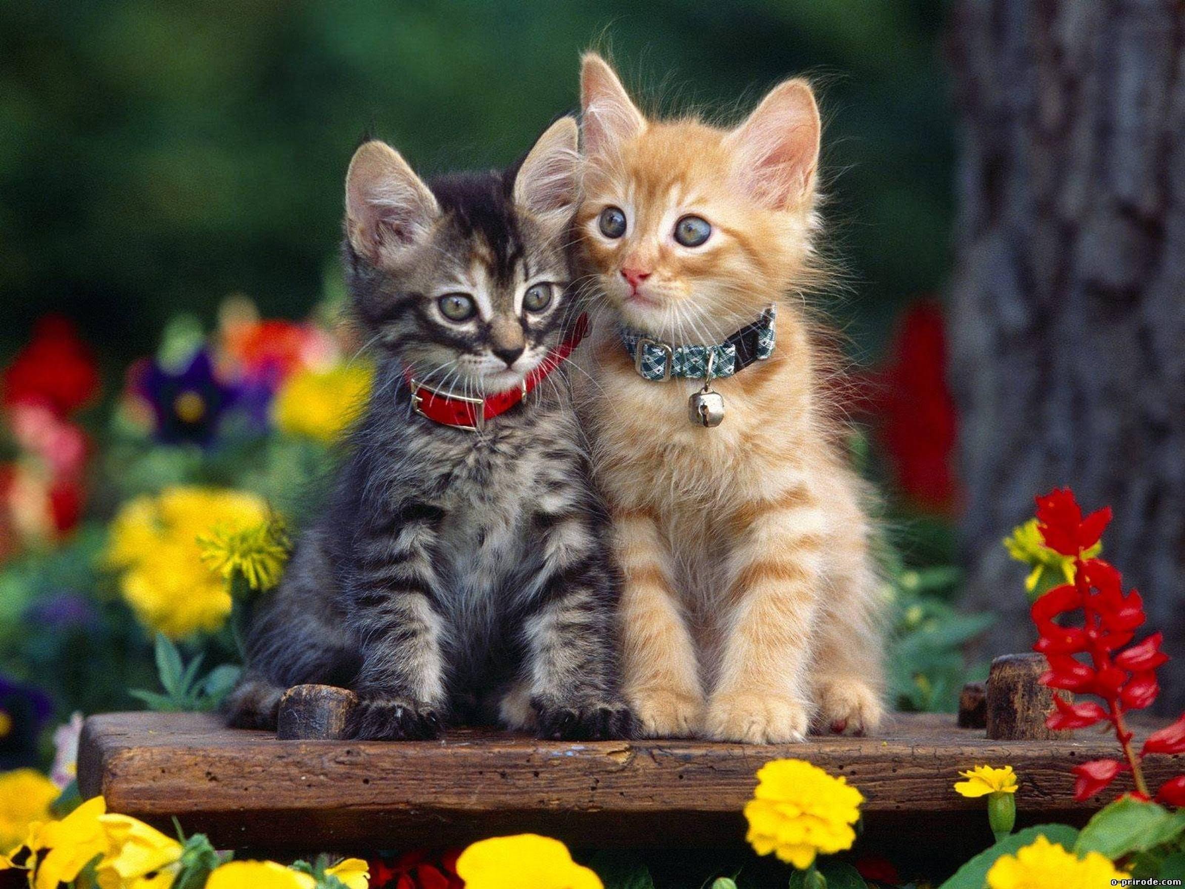 Hình ảnh đẹp giữa 2 chú mèo con thật đẹp đúng không nào