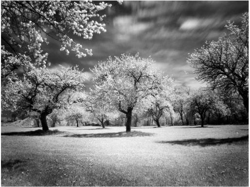 Tranh trắng đen nghệ thuật phong cảnh tuyệt đẹp